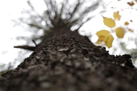 Fa közeli perspektívából