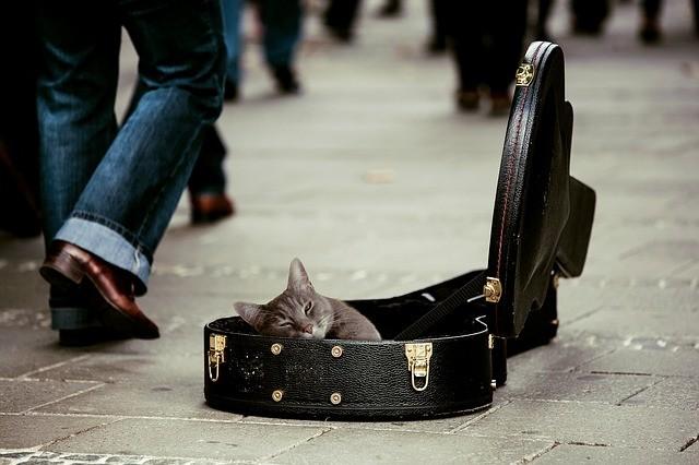 Macska a gitártokban