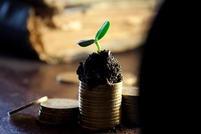 Aprópénz és növény